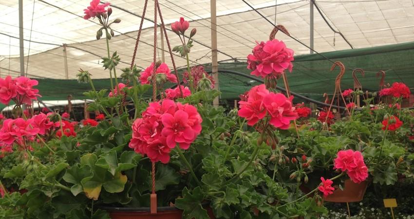 Plantas de jardin exterior finest plantas de jardin for Plantas para jardin exterior